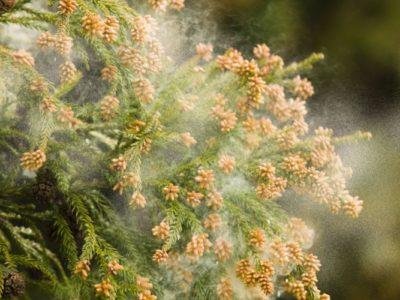 花粉に挑むボルボの高性能フィルター!!
